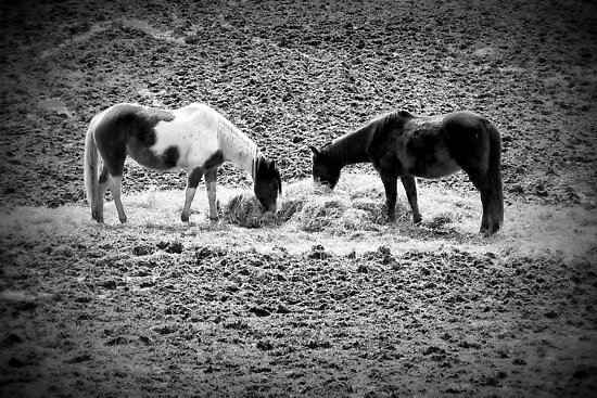 Horses in Hay equine artwork black and white art by jemvistaprint