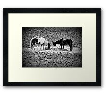 Horses in Hay equine artwork black and white art Framed Print