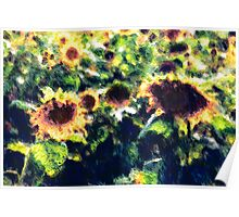 Sunflowers No. 1 Poster