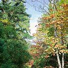 Forstbotanischen Garten by Kerry Dunstone
