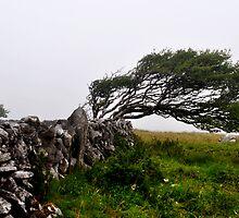 Southwesterly winds by Karin  Funke