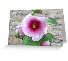 Pink Hollyhock, France Greeting Card