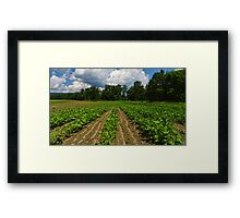 Field of Beans Framed Print