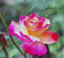 Pink, yellow and lavender rose.  by Don Wright
