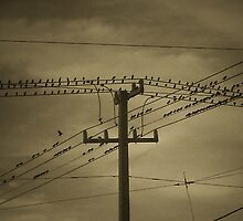 Birds on a Wire by Nikki Sanford