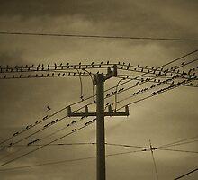 Birds on a Wire by Nikki Sanford
