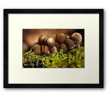 brown bunch Framed Print