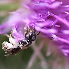 Bee on Thistle Flower by Sheryl Hopkins