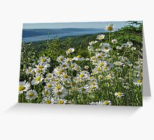 Daisies in Bras D'Or Greeting Card