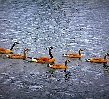 Canadian Goose Family by Rochelle Smith