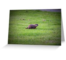 Groundhog Greeting Card