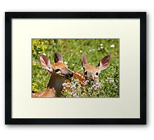 No! We Are Not Chihuahuas! Framed Print