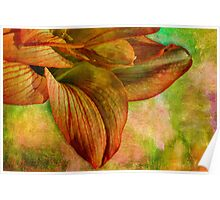 Sunny amaryllis on canvas Poster