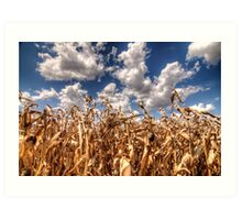 Dead Corn Under a Cloudy Sky Art Print