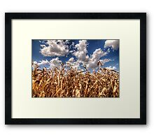 Dead Corn Under a Cloudy Sky Framed Print