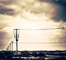 Telegraphs by Nicola Smith