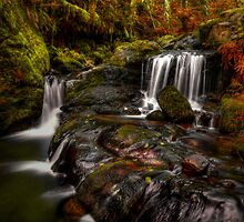 That's The Spot by Charles & Patricia   Harkins ~ Picture Oregon