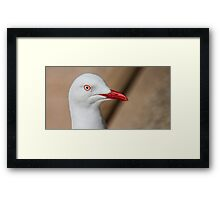 See Sea Gull Framed Print