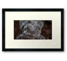 Staring Dragon Framed Print