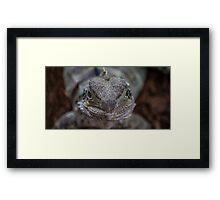 Staring Dragon Framed Print