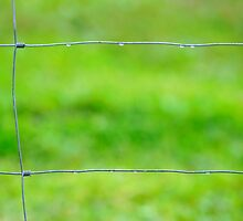 fenced in by metriognome