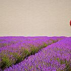 Lavender Fields by Fern Blacker