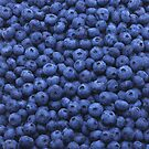 Blueberry Blue by Andrew Bret Wallis