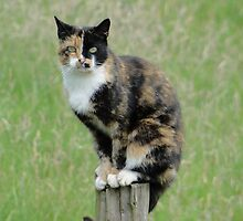 Undecided? ... Sitting On The Fence? by Barrie Woodward