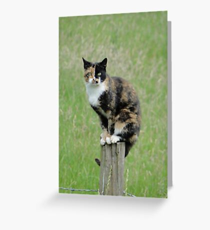 Undecided? ... Sitting On The Fence? Greeting Card