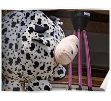 Prize Cow for Jean Poster