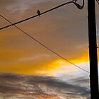 Dusk bird tweets into silence by MarianBendeth