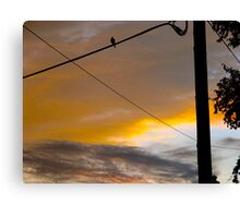 Dusk bird tweets into silence Canvas Print