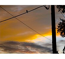 Dusk bird tweets into silence Photographic Print