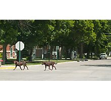Two Dogs Photographic Print