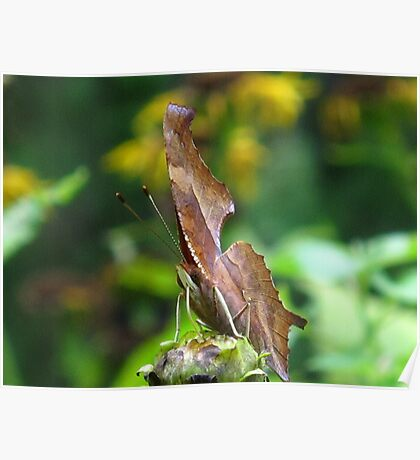 Rawhide Butterfly Poster