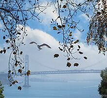 Bay Bridge and the Gull by David Denny