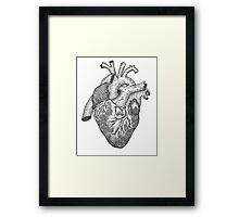 Anatomical Heart Ink Illustration Framed Print