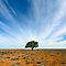 A Lonely Tree - (Canon EOS images only)