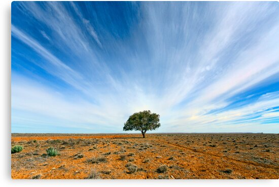Stand Out - Tibooburra, NSW by Malcolm Katon