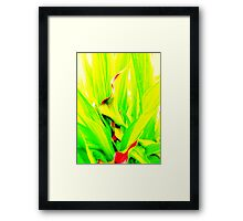 Calla Abstract Framed Print