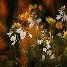 Fire Flowers by Eileen McVey