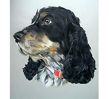 English Cocker Spaniel Dog Photographic Print