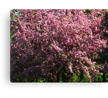 Blossoms in bloom Canvas Print