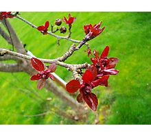 Red Tree With Grass Photographic Print