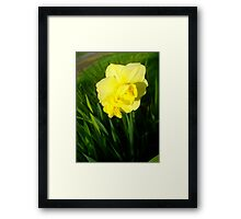 Daffodils In The Spring Framed Print