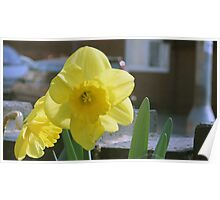 Yellow trumpet Poster