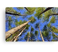 Tree Perspective Canvas Print
