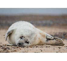 Seal Pup 3 Photographic Print