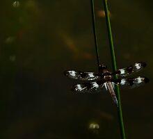 Dragonfly by Joanne  Bradley