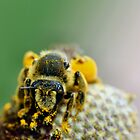 Bumble Bee by Keala